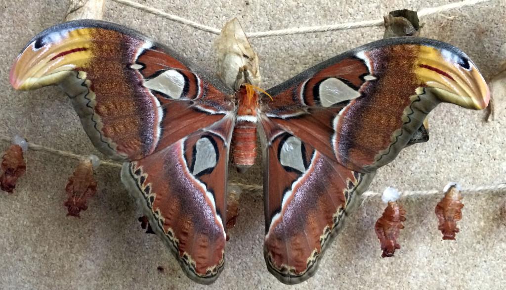 moth_MLS
