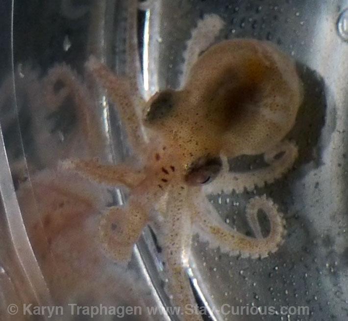 TBL_May_2015_06_octopus